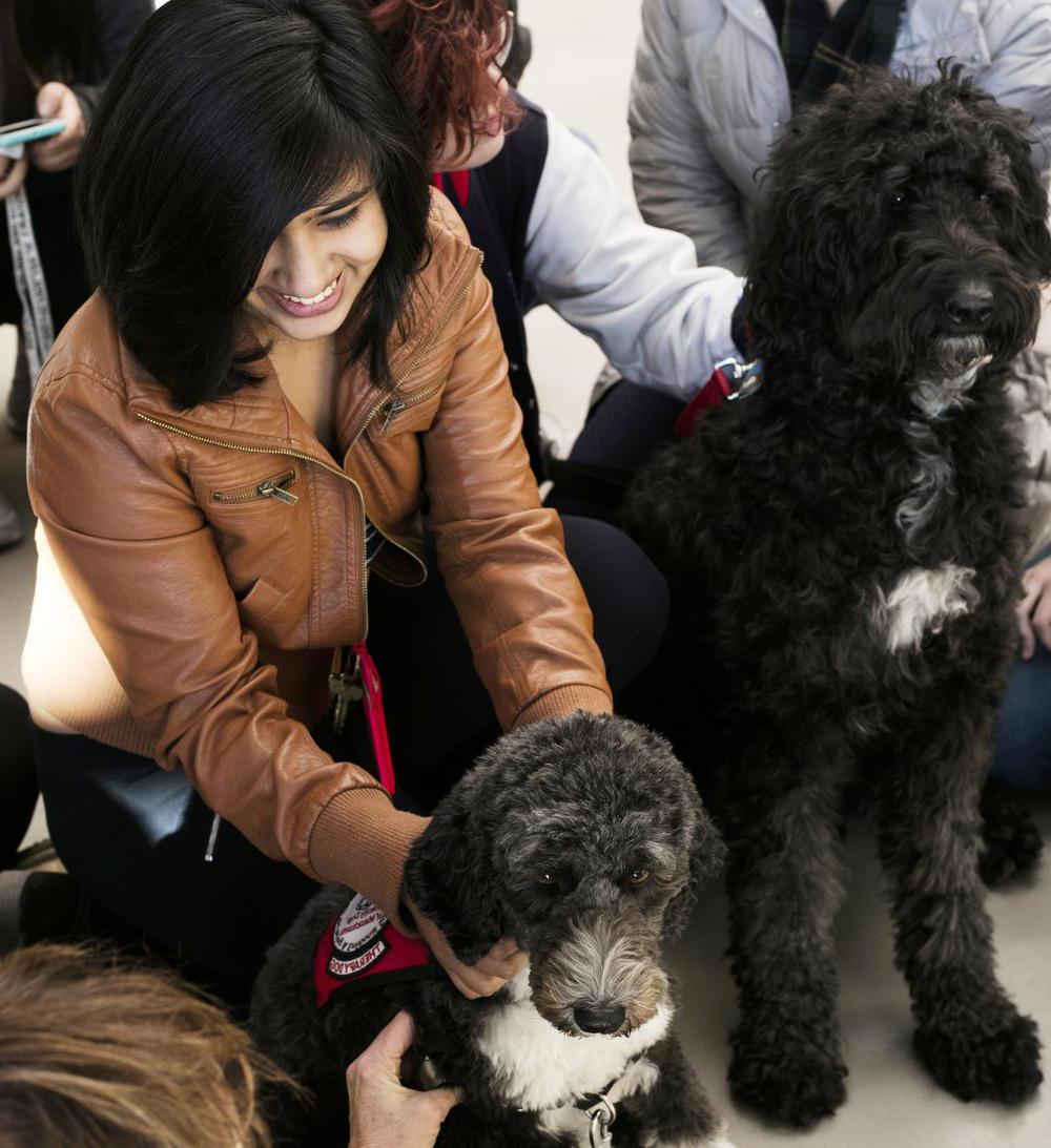 "学生享受咨询 & Wellness' ""Pet a Pooch"" event"